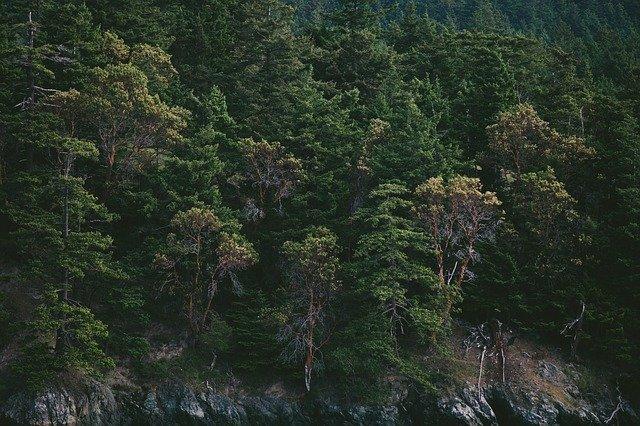 pine-trees-1149943_640